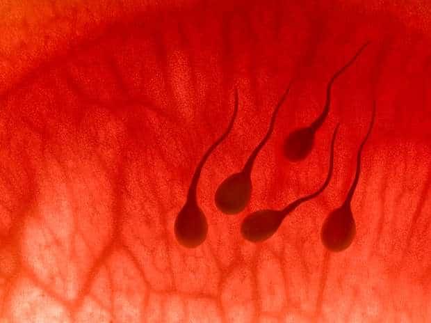 esperma artificial